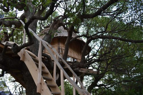 treehouse5